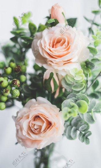 浅粉色玫瑰高清素材图片