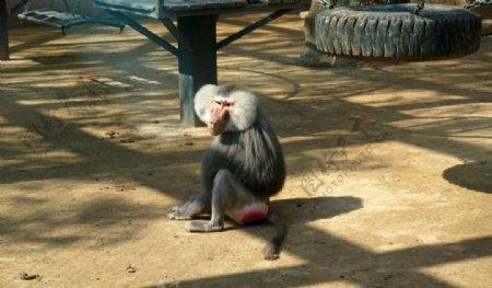 猴子照片图片