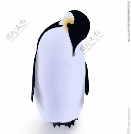 卡通企鹅图片