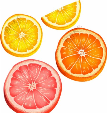 手绘矢量橙子切片图片