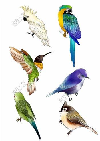 手绘各类小鸟素材图片