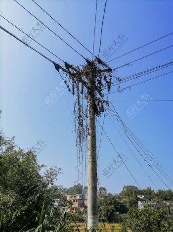 乡村电线杆图片