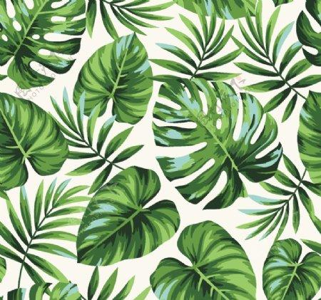 热带叶子图片