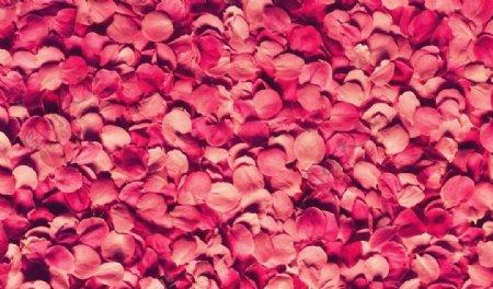 花瓣壁纸图片