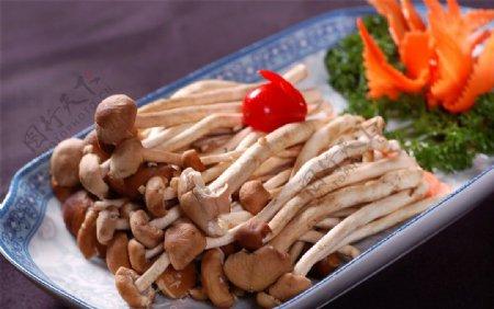 配料茶树菇图片