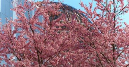 粉色花朵植物树枝背景图片