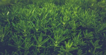 绿油油多肉植物图片