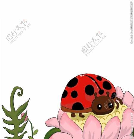 手绘瓢虫插画图片
