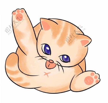 可爱的橘色小猫图片