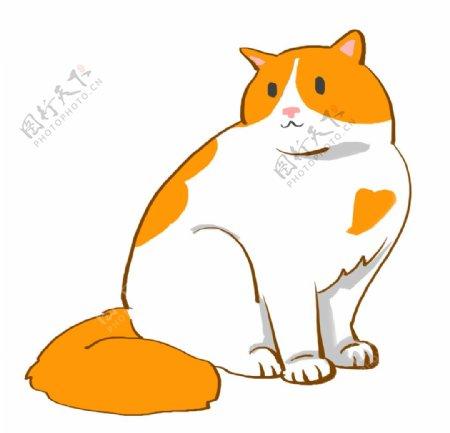 胖胖的可爱猫咪图片