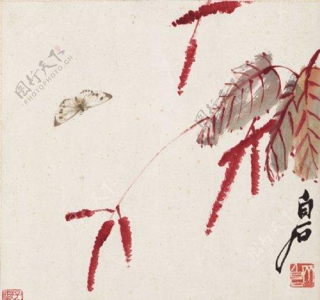 齐白石国画红蓼彩蝶图图片