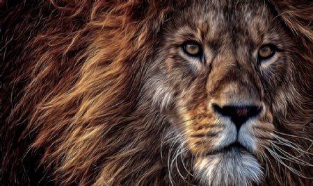 狮子森林之王图片